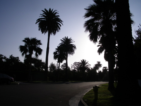 Palm trees, morning sky, Pasadena