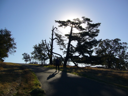 Trees on the Alpine Road side of 'Big Dish'