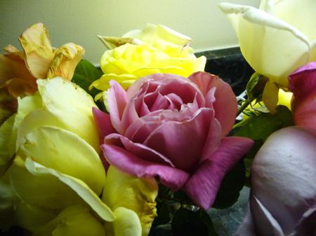 Roses from Trinity Church's memorial garden