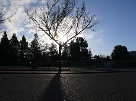 Bright sky, long shadows on a 24-degree morning in Meno Park