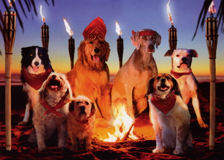 Doggy birthday card