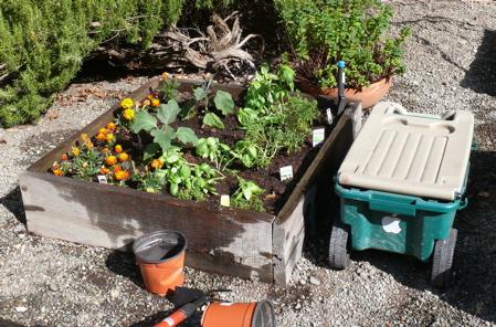 Planter box with new TJ Basil plants