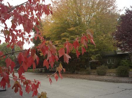 Leaves turn fall colors