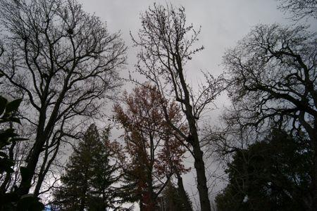 Winter day in Menlo