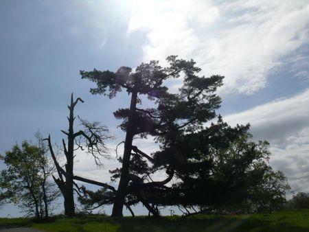 Tree, Academic Preserve
