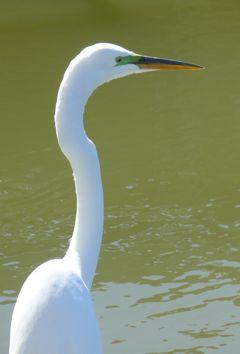 An egret poses at Baylands