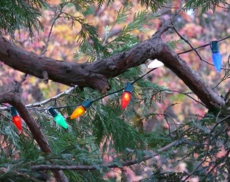 tree_lights.jpg