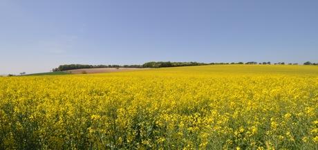 kilometres_de_jaune1