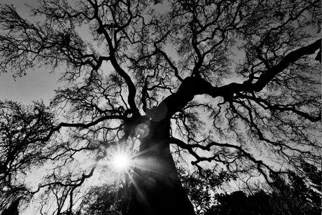 oak-txp
