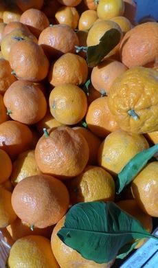 oranges_frmrs_mkt
